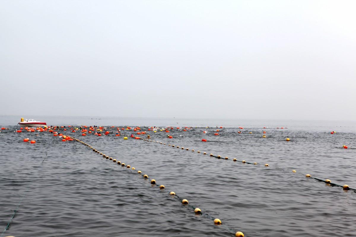 国际海水浴场进行了威海市213年公开水域游泳比赛暨横渡刘公岛选拔赛.