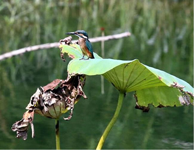 里口山鸟类摄影基地