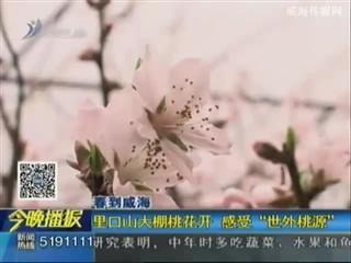 """里口山大棚桃花开 感受""""世外桃源"""""""