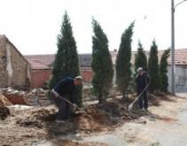 威海市立医院送树进村 打造美丽居住环境