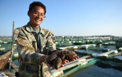 威海:规模化深海养殖海参迎来捕捞季