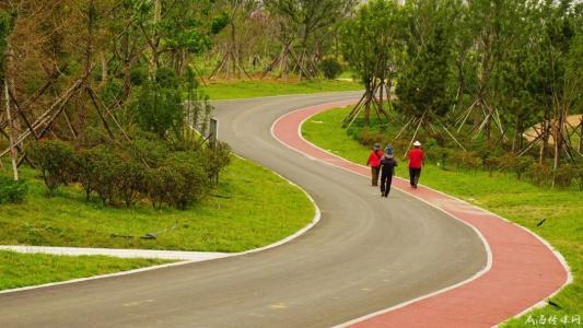 密织成网 新城140公里绿道网规划获批实施