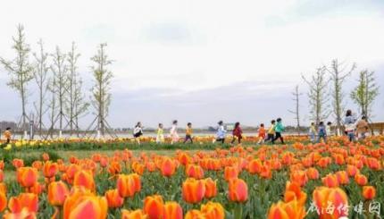 最美四月天,威海南海新区30万株郁金香竞相绽放
